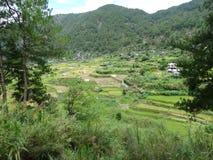Giacimento del riso di Sagada, Luzon, Filippine Fotografia Stock Libera da Diritti