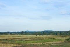 Giacimento del riso dopo il raccolto in natura Immagini Stock Libere da Diritti