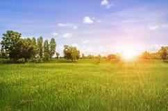 Giacimento del riso e bello verdi ed alba Fotografie Stock