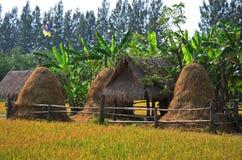 Giacimento del riso e capanna della paglia alla Tailandia Immagini Stock