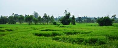 Giacimento del riso e capanna della paglia alla Tailandia Immagine Stock Libera da Diritti