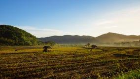 Giacimento del riso e coltivare nella provincia di Chiang Mai Fotografia Stock Libera da Diritti