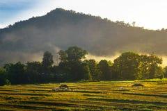 Giacimento del riso e coltivare nella provincia di Chiang Mai Immagine Stock Libera da Diritti