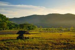 Giacimento del riso e coltivare nella provincia di Chiang Mai Fotografie Stock Libere da Diritti