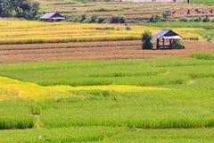 Giacimento del riso e fondo delle capanne. Fotografie Stock