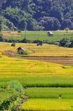 Giacimento del riso e fondo delle capanne. Immagine Stock Libera da Diritti