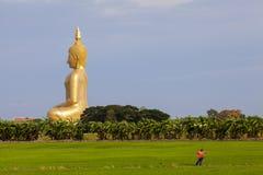 Giacimento del riso e muang grande Buddha del wat nella provincia del angthong, thaila Fotografia Stock
