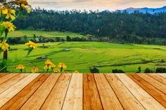 Giacimento del riso e pavimento a terrazze di legno Fotografia Stock Libera da Diritti