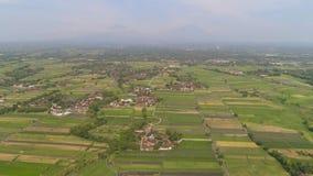 Giacimento del riso e terreno agricolo in Indonesia stock footage