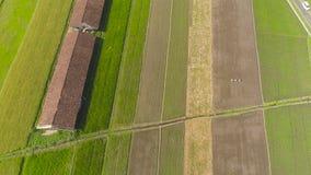Giacimento del riso e terreno agricolo in Indonesia archivi video