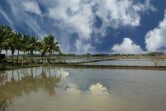 Giacimento del riso Il Kerala, India del sud Fotografie Stock