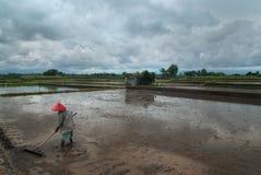 Giacimento del riso: la figura di un uomo in vestiti grigi ed in un cappello rosso, nelle mani di un rastrello, il giacimento del Immagine Stock Libera da Diritti