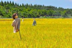 Giacimento del riso nel Giappone Fotografia Stock Libera da Diritti