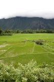 Giacimento del riso nel Laos Fotografia Stock Libera da Diritti