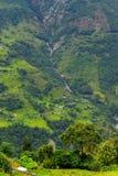 Giacimento del riso nel Nepal Fotografia Stock Libera da Diritti