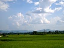 Giacimento del riso nel Nord della Tailandia Immagini Stock Libere da Diritti