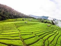 Giacimento del riso nel Nord della Tailandia Fotografia Stock