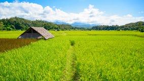 Giacimento del riso nel Nord della Tailandia Fotografie Stock