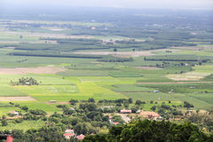 Giacimento del riso nel Vietnam fotografie stock