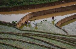 Giacimento del riso nel Vietnam del Nord Fotografie Stock Libere da Diritti
