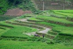 Giacimento del riso nel Vietnam del Nord Fotografia Stock Libera da Diritti
