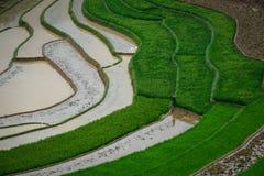 Giacimento del riso nel Vietnam del Nord Fotografia Stock