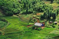 Giacimento del riso nella montagna di Sapa Immagini Stock Libere da Diritti