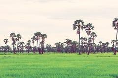 Giacimento del riso nella stagione delle pioggie Retro effetto d'annata del filtro immagini stock libere da diritti