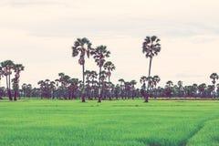 Giacimento del riso nella stagione delle pioggie Retro effetto d'annata del filtro immagine stock libera da diritti