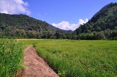Giacimento del riso, a nord della Tailandia Immagini Stock Libere da Diritti