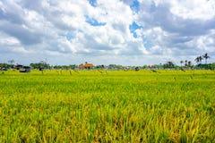 Giacimento del riso, palme e case, paesaggio rurale, isola di Bali, Indonesia fotografia stock libera da diritti