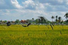 Giacimento del riso, palme e case, paesaggio rurale, isola di Bali, Indonesia fotografie stock