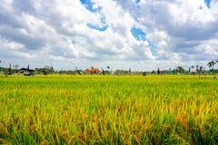 Giacimento del riso, palme e case, paesaggio rurale, isola di Bali, Indonesia immagini stock