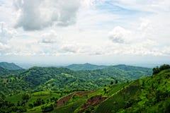 Giacimento del riso sulla montagna Fotografia Stock Libera da Diritti