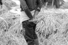 Giacimento del riso, Ubud, Bali Fotografie Stock