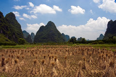 Giacimento del riso in Yangshuo Fotografia Stock Libera da Diritti