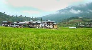 Giacimento del risone al villaggio di Sopsokha nel Bhutan Fotografia Stock