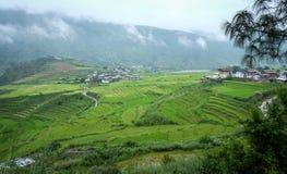 Giacimento del risone al villaggio di Sopsokha nel Bhutan Fotografie Stock Libere da Diritti