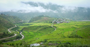 Giacimento del risone al villaggio di Sopsokha nel Bhutan Immagini Stock Libere da Diritti