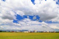 Giacimento del risone con cielo blu e la nube bianca Fotografia Stock