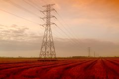 Giacimento del risone con i cavi elettrici Fotografie Stock Libere da Diritti