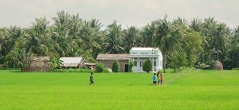 Giacimento del risone nel Vietnam del sud Fotografia Stock