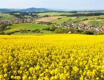 Giacimento del seme di ravizzone - brassica napus - pianta per energia verde Fotografie Stock