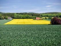 Giacimento del seme di ravizzone con le colline nei precedenti Fotografie Stock