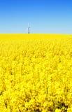 Giacimento del seme di ravizzone della turbina di vento Immagine Stock Libera da Diritti