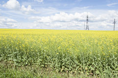 Giacimento del seme di ravizzone e linea elettrica di fioritura Fotografia Stock Libera da Diritti