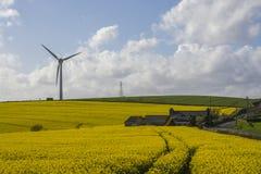 Giacimento del seme di ravizzone il giorno soleggiato con il generatore eolico nel fondo Immagine Stock