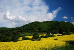 Giacimento del seme di ravizzone sotto una montagna Immagine Stock Libera da Diritti