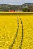 Giacimento del seme oleifero Fotografie Stock