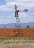 Giacimento del sorgo vicino a Quirindi Fotografia Stock Libera da Diritti